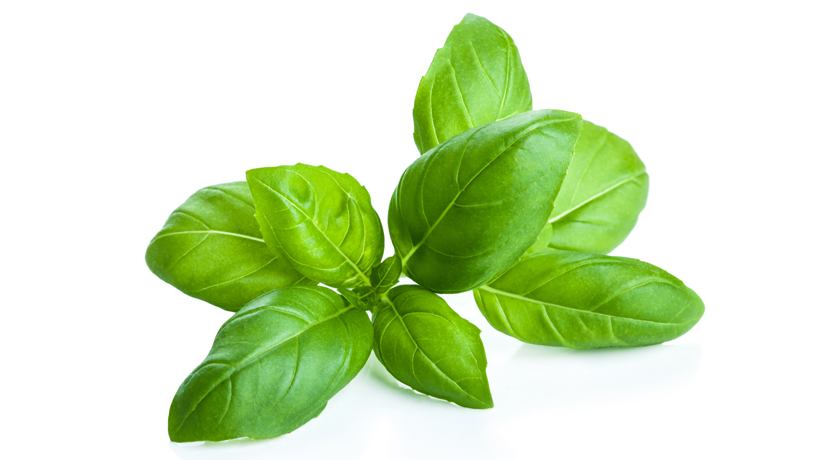 Basil olive oil (Rapid Infusion)