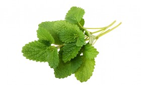 Lemon balm olive oil