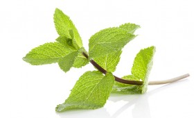 Peppermint Vinegar ( Rapid Infusion )