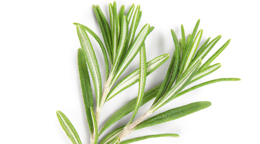 Rosemary Olive Oil (Rapid Infusion)