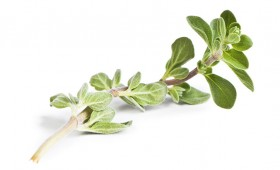 Thyme Vinegar ( Rapid Infusion)